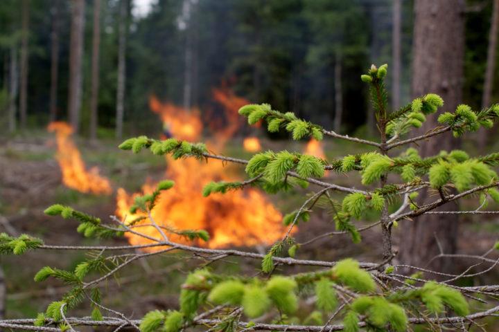 Økende skogbrannfare